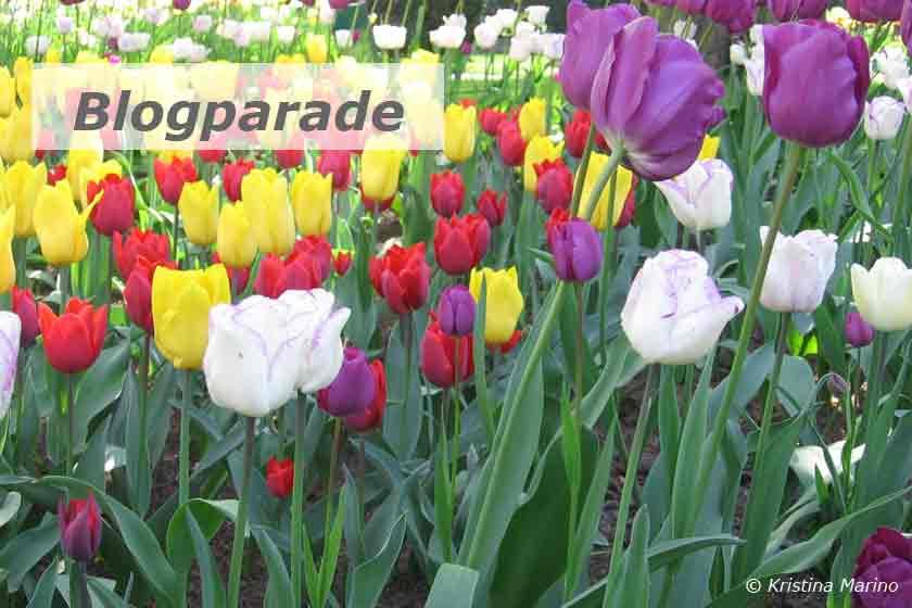 Tulpenfeld Titelbild Blogparade